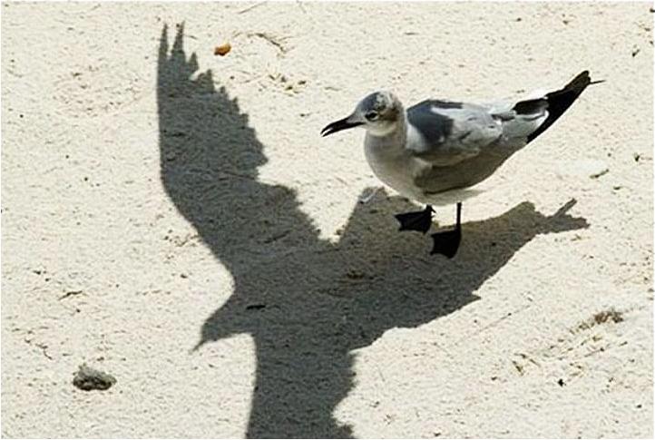 Птичка с лишней тенью
